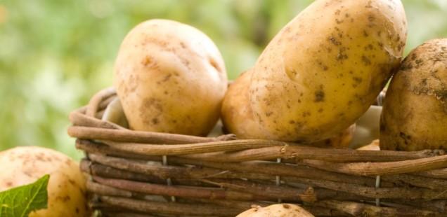 5. Niederdorfer Kartoffelfest