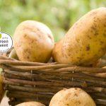 8. Niederdorfer Kartoffelfest